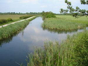 East from Longore Bridge 5 - reeds winding hole