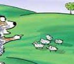 sheep-resized-1